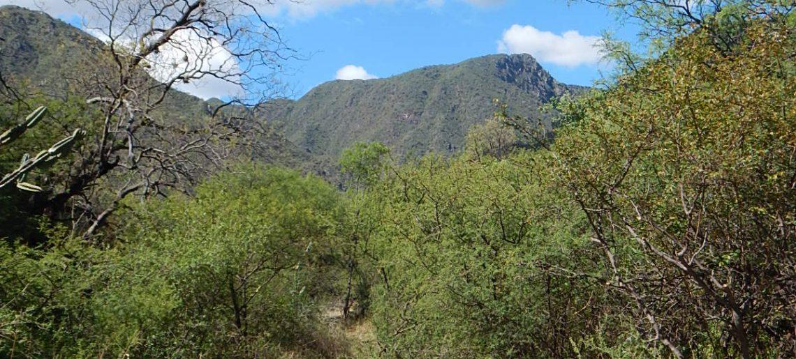 Convocan al Foro Urbano Ambiental para tratar la ampliación de las áreas protegidas en Carlos Paz