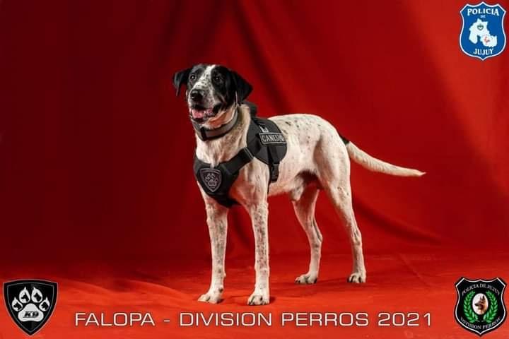 Se llama Falopa, es tendencia, y forma parte de la división canes de la Poli de Jujuy