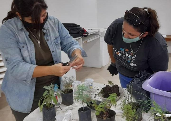 Huerta agroecológica: Dónde realizar los talleres gratuitos en Carlos Paz