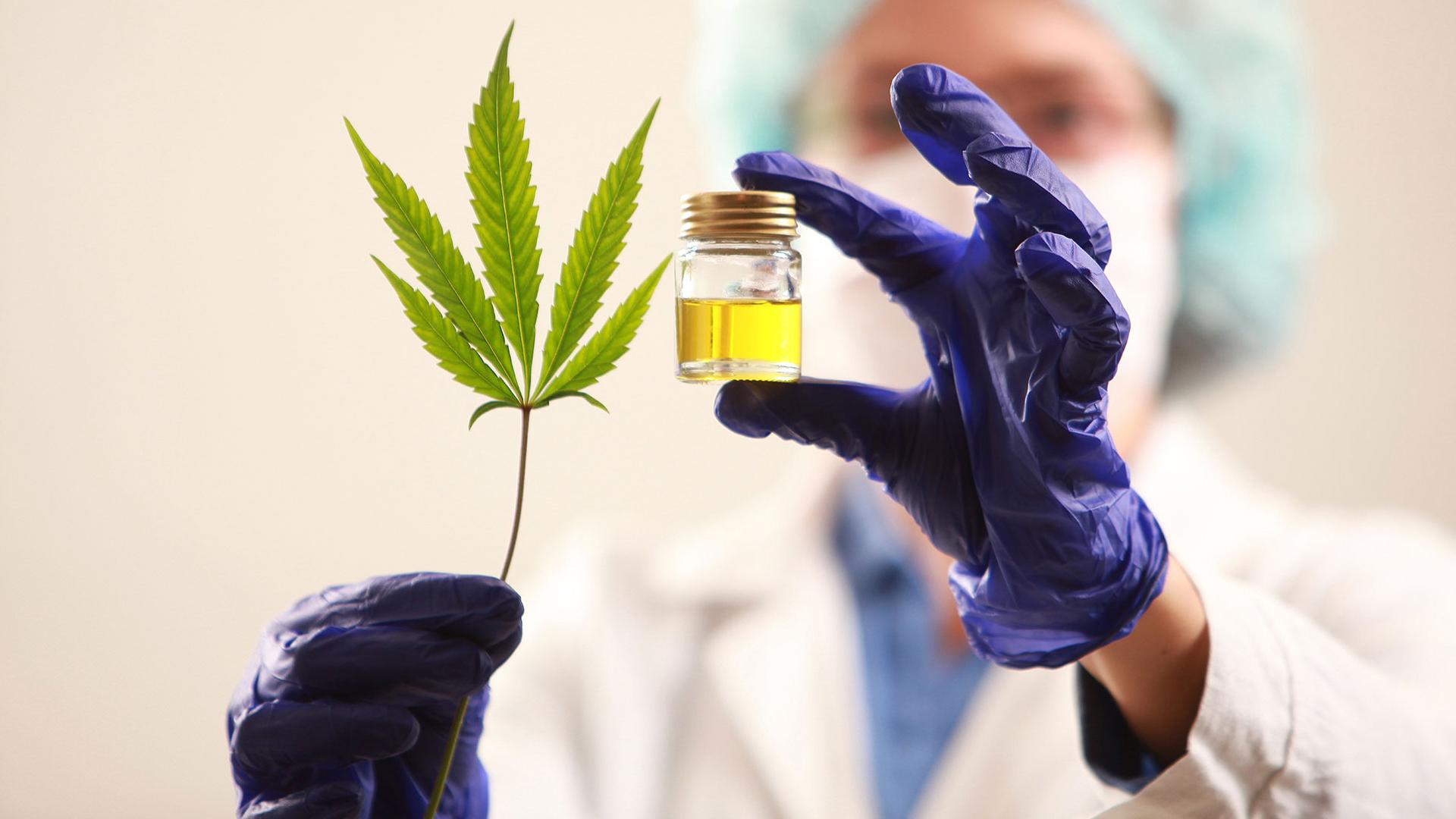 Cannabis medicinal: cómo se aplicará la ley en Córdoba y quiénes podrán producirlo