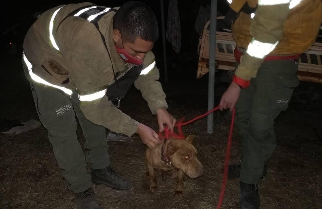 Bomberos rescataron a un perro que cayó a un profundo pozo en San Antonio