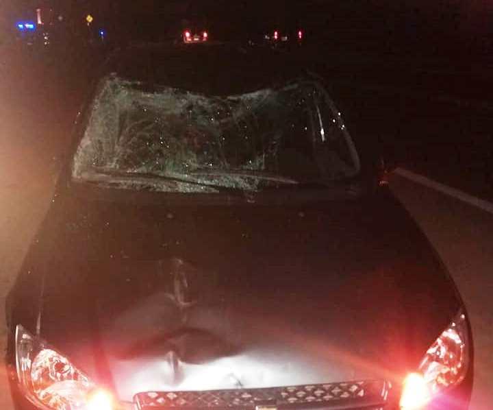 Caballos sueltos provocaron un nuevo accidente en la Ruta 38